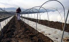トウモロコシ畑、種まき開始!