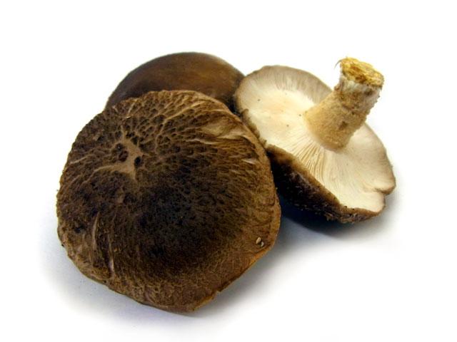 原木しいたけ。春の椎茸は春子と呼ばれます。 まずは自然の樹木を用いて作られる「原木しいたけ」です
