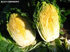 20111123オレンジ白菜2.jpg