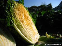 20111123オレンジ白菜3.jpg