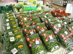 20120104ちぢみほうれん草.jpg