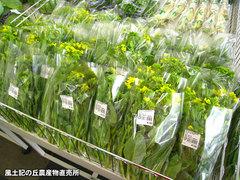20120331菜花.jpg