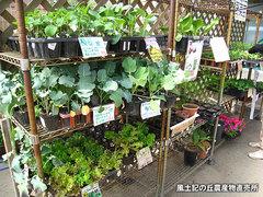 20120425野菜苗売り場.jpg