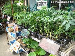20120425野菜苗売り場2.jpg