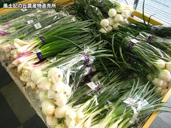 20120506葉たまねぎ.jpg