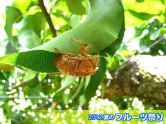 20120812ぬけがら.jpg