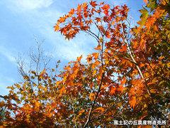 20121012公園6.jpg