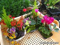 20121212鉢植え4.jpg