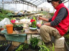 20121212鉢植え5.jpg