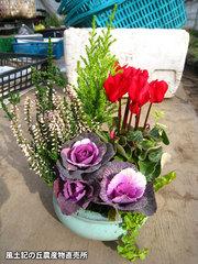 20121212鉢植え6.jpg