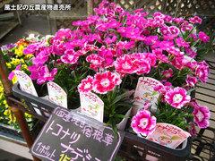 20130310ナデシコ.jpg