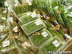 20130405山菜.jpg