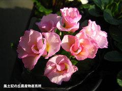 20140130barazaki.jpg