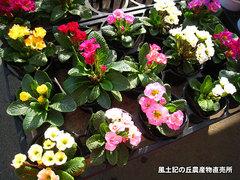 20140130barazaki2.jpg