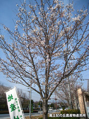 20140402sakura.jpg