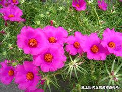 20140823matsuba2.jpg