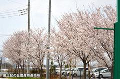 20150401sakura.jpg