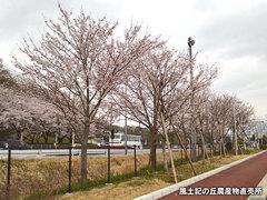 20160403sakura001.jpg