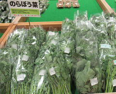 20210324のらぼう菜.jpg