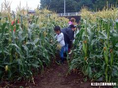 もろこしフェア2019収穫体験01.jpg
