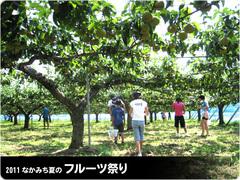 フルーツ祭り-収穫体験.jpg