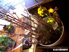 桃の花0306.jpg