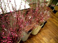 桃の花0315.jpg