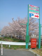 桜04072.jpg