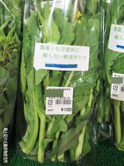 菜の花0226.jpg