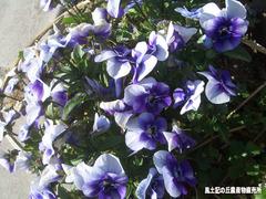 野の花0404.jpg